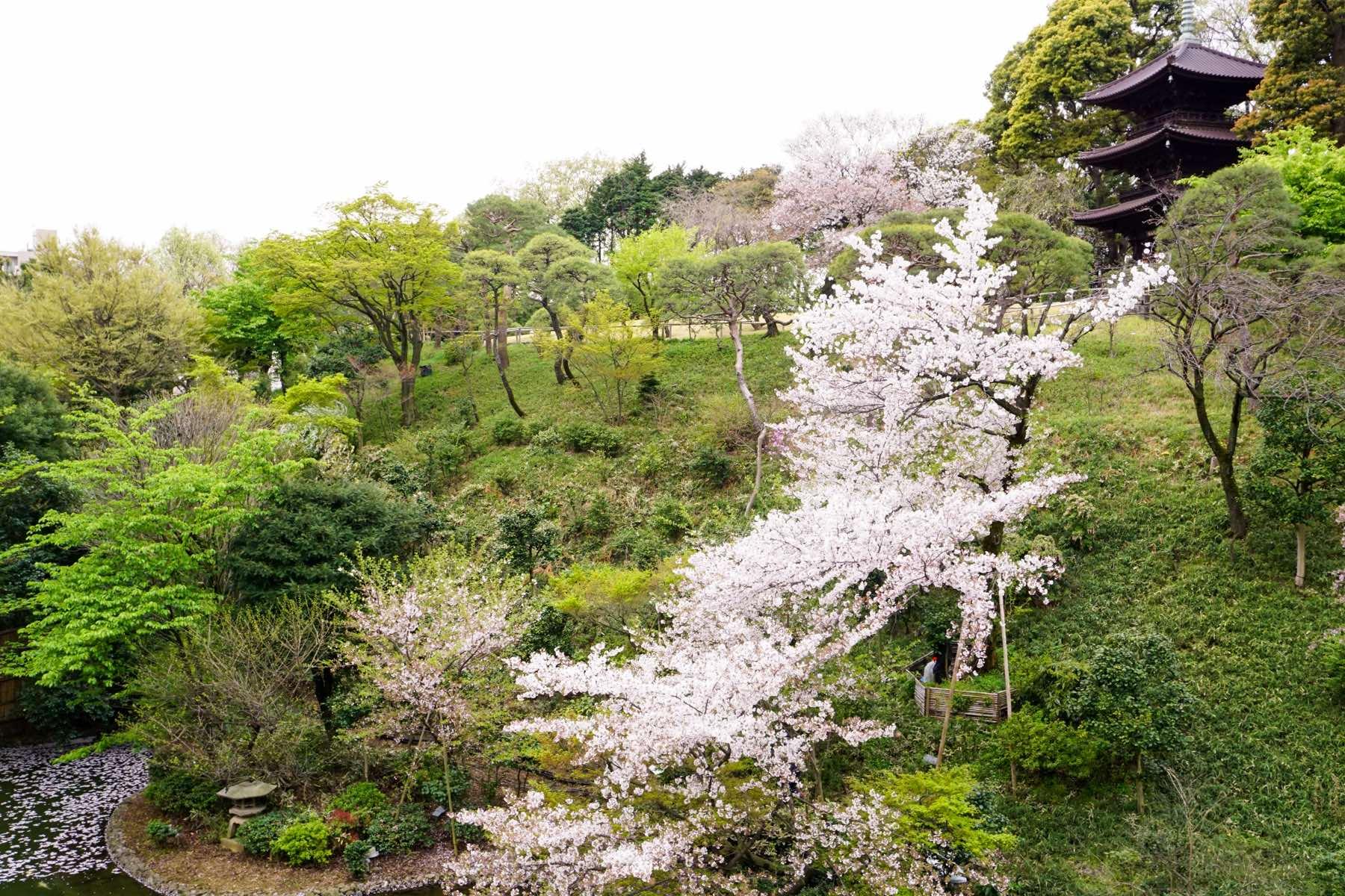 椿山荘の庭園 アフタヌーンティー